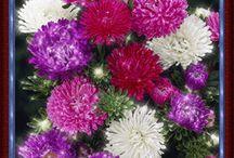 Virágok vegyes