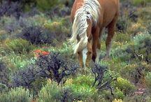 Horses ♡♥ / best animals