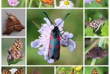 Collage met vlinders