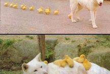 Animals ☆★☆★