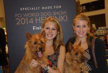 Aussie terriers / Aussies!