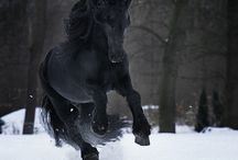 horses / by Bobbi Sierzchula