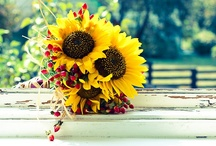 Sunflower Wedding Theme / Thinking of having a sunflower themed wedding? Check out this great sunflower wedding inspiration board. Sunflowers are cheerful and fun! A fantastic wedding theme choice for summer and fall weddings.  This is one of the best sunflower wedding boards on pinterest and features a variety of sunflower wedding invitations, wedding decor, bouquets, and other ideas and inspiration. #weddings #themes #inspiration #sunflower #sunflowers #wedding