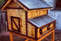 Chicken Coops / by Tamra Green