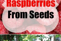 Edible Plants From Seed