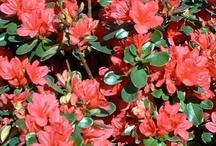 Wishlist: flowers
