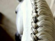 Horse plaiting
