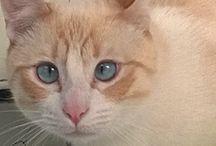 Nico y Kira / Nico, el gato más guapo de la casa