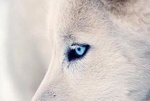 Loveliest Spirit Guardian: Wolf.