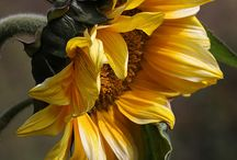 Flowers / by Jenny Yowell Klungland
