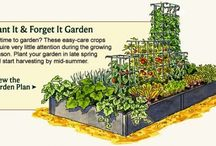 Small Garden / Ideas for the barren spaces in our garden...