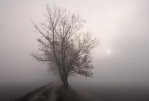 Misty / by Giorgio Galeotti