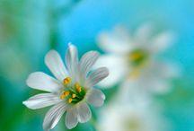 Flowers-my world