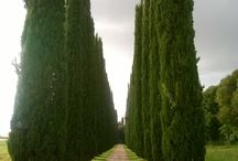 historic gardens / zabytkowe ogrody