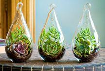 terrarium & garden