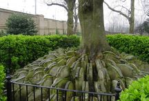 Cemeteries / by Pretty Things Blog :: Lori Anderson Designs