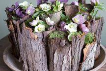 cortezas de troncos