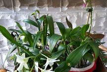 southwest florida Orchid Society
