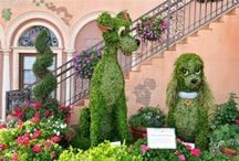 Topiaria / El arte de la Topiaria es una práctica de jardinería que consiste en dar formas artísticas a las plantas mediante el recorte con tijeras de podar.