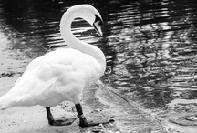 Bergfolio | Animals
