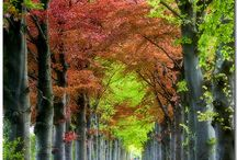 Netherlands / by Amy Van Dam