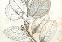 Reference // botanical