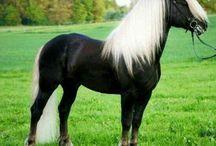 Horses - масть игреневая