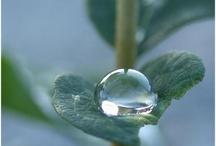 Purifying rain