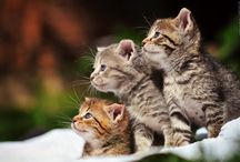 Domestic Cats / Cats belong on the internet. / by Nur Hussein