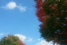 Autumn at Treetops / Beautiful Tress with Fall Leaves