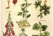 Les plantes psychoactives toxiques