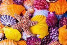 Sea Shells and The Works