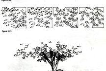 copaci arhi