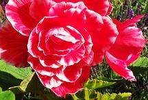 I Simply Love Flowers
