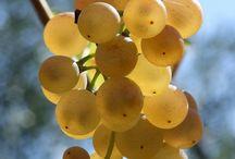 Nel Chianti tra vigne e oliveti / Le meraviglie della nostra campagna.