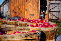 Barns and farms E-i-e-i-o