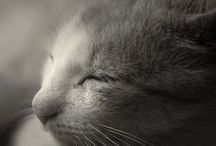 Animals / by Kat Thornton