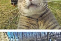 Cats and selfies