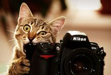 Pictures we like / Whether it is a pet, a child or an inexperienced photographer: sometimes your camera just needs to be protected from something.