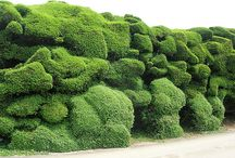 Topiary, hedge, living fence and espaliers