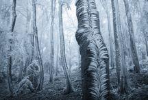 Fotografie: Bäume