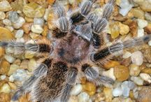 Reptile, Amphibian, & Arachnid Articles from Pet Care Corner / by PetSolutions Pet Supplies