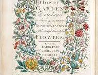 Georgian Flower Calendar / Twelve months of flowers by Robert Furber c1730