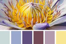 C: Yellow & Purple