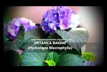 Çiçek yetiştirme ve bakımı