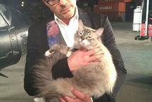 boys&cats