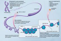 Epigenetic