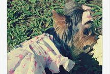DFspa ♥ flower dog contest