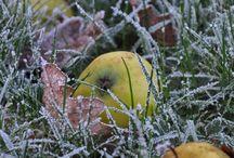 Art de Vivre - Le gel / En hiver, la nature se couvre d'une petite couche de givre, pour le plus grand bonheur des promeneurs matinaux...