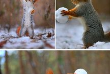 Squirrels ^^